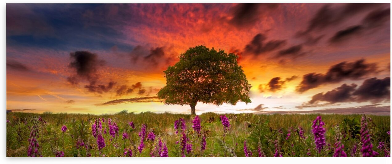 Foxgloves at sunset by Leighton Collins