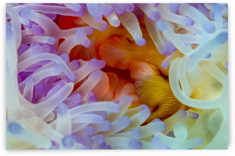 Sea Anemone 5 by Tanya G Burnett