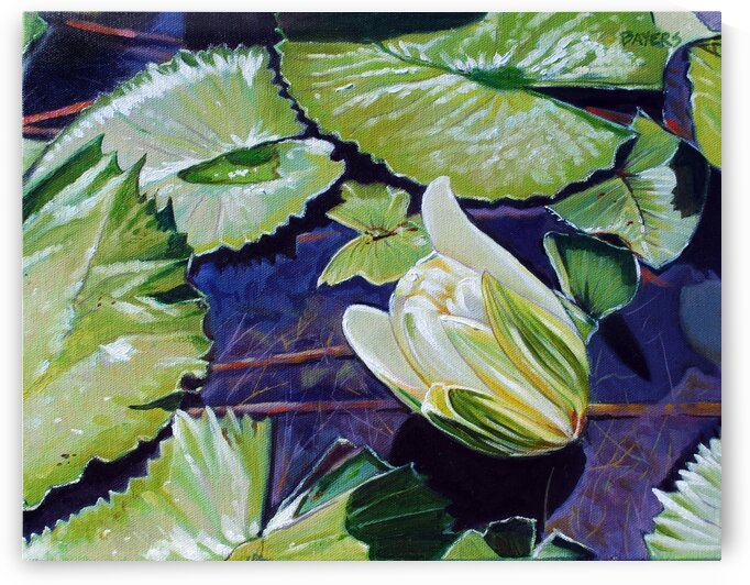 Lily Pads With Small White Bud by Rick Bayers