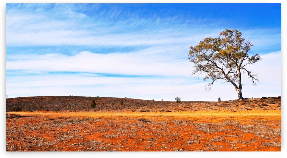 Lone Tree in the Outback by Lexa Harpell