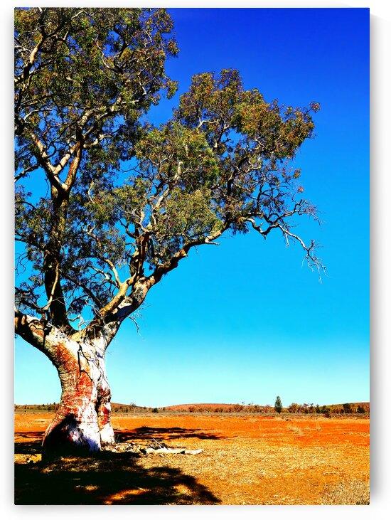 Gum Tree in Flinders Ranges 2 by Lexa Harpell