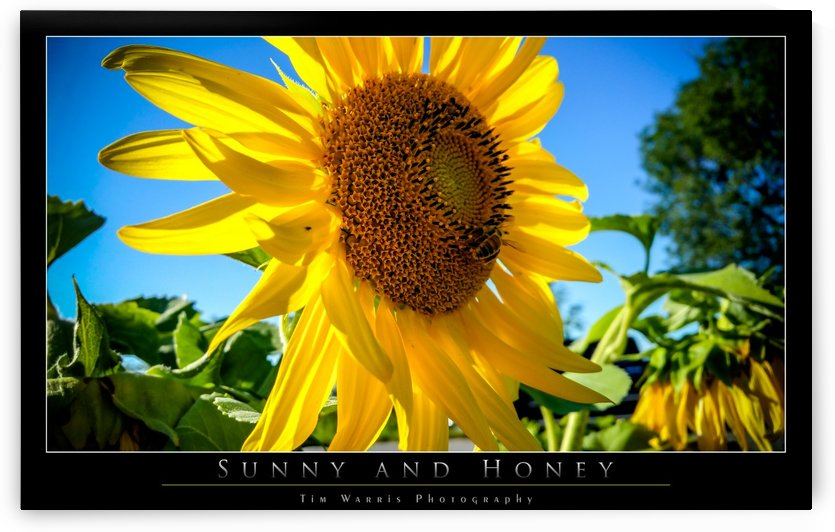 Sunny and Honey by Tim Warris Photography