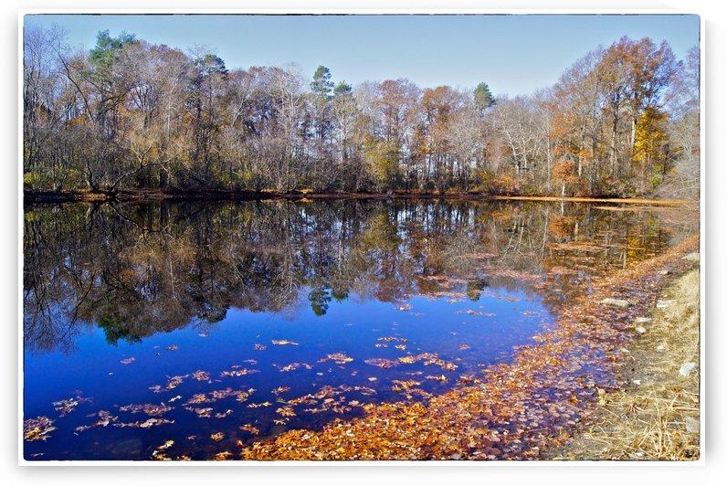 November Pond by Sue Bonior