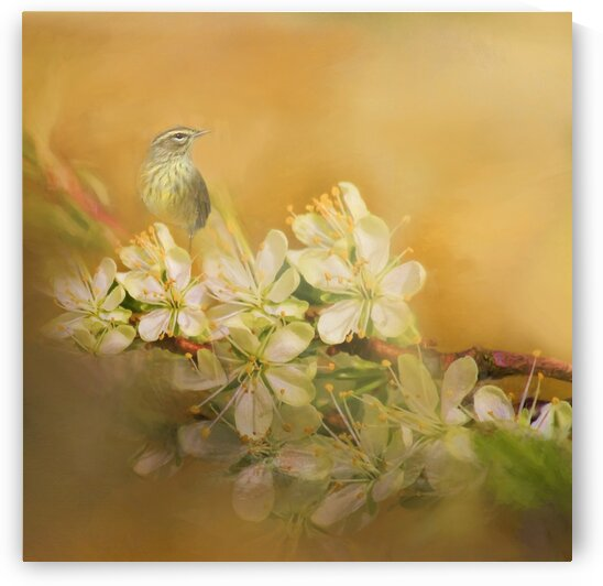 Palm Warbler Floral  by HH Photography of Florida