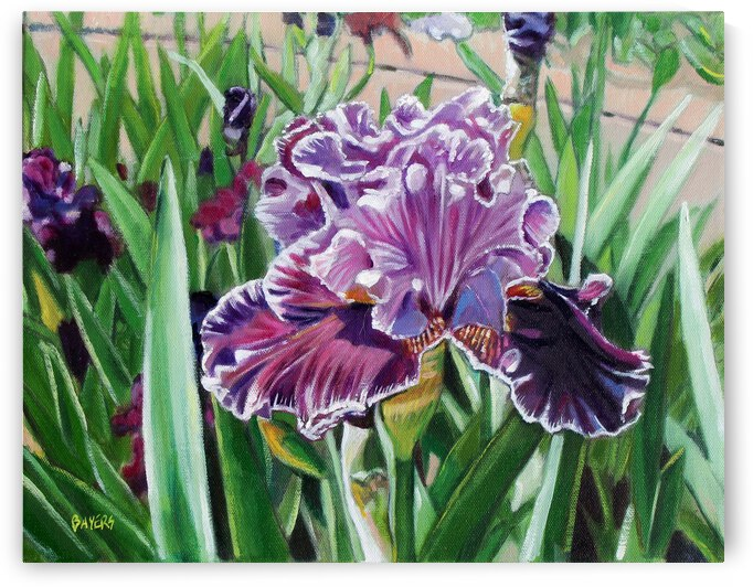 Bed of Purple Iris by Rick Bayers