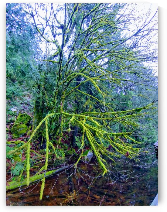 MOSSY BRANCHES by Nat