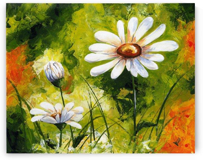 White Daisies 005 by Edit Voros