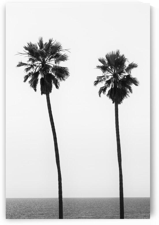 Palm trees by the sea   monochrome  by Melanie Viola