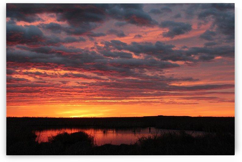 Prairie Sunrise by Jody Majko