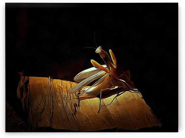 Posing Praying Mantis by Dorothy Berry-Lound