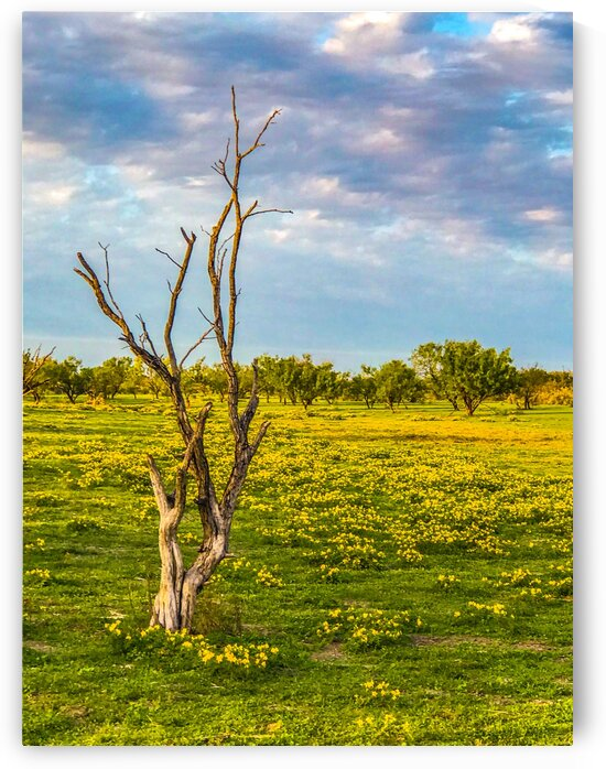 Dead tree yellow flowers 0920 by Shay Morrow