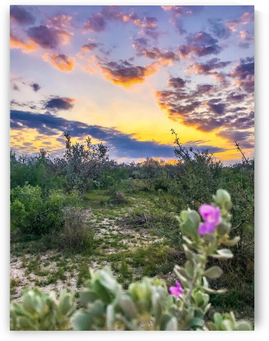 Brackettville TX sunset 0920 by Shay Morrow