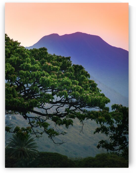 Tree in Front of Mountain by Bobby Twilley Jr