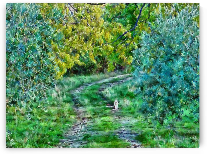 Autumn Cat Walk by Dorothy Berry-Lound