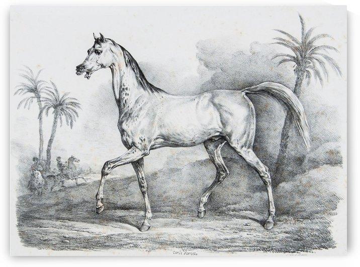 Arab horse by Antoine Charles Horace Vernet