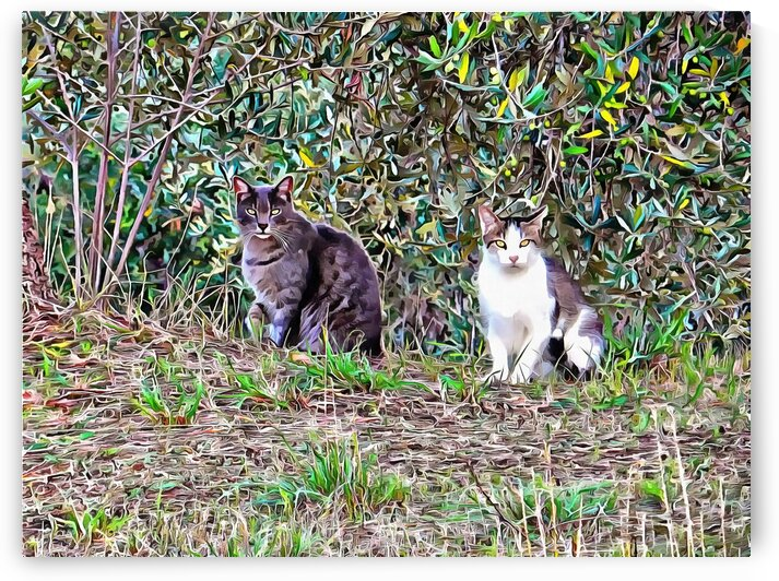 A Furry Bromance by Dorothy Berry-Lound
