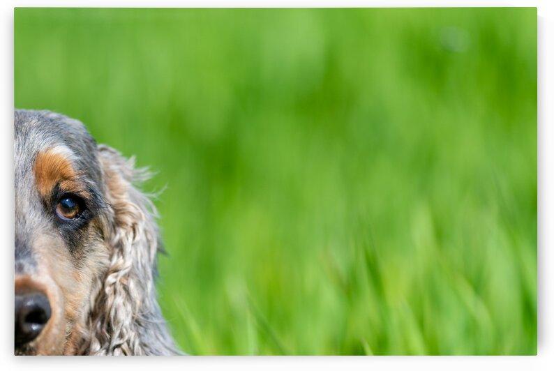 Dog in Grass  by Pete bird - StrangeWorkz