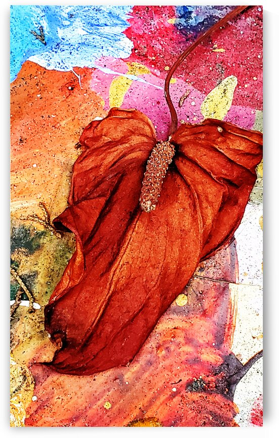 Dry Leaf On Painted Cement by Lawrence Costales
