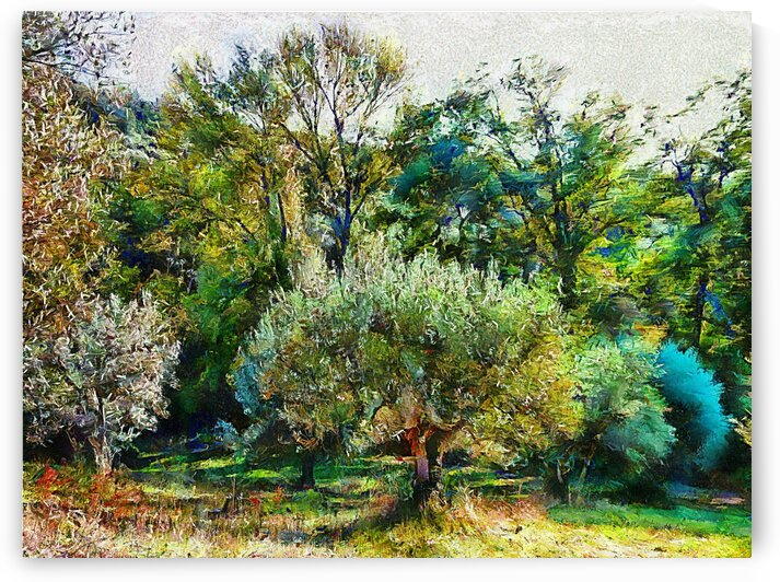 Olive Trees With Woodland Backdrop by Dorothy Berry-Lound