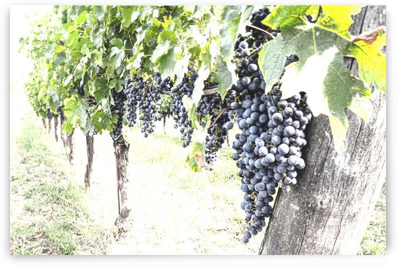 Grape by Luigi Girola