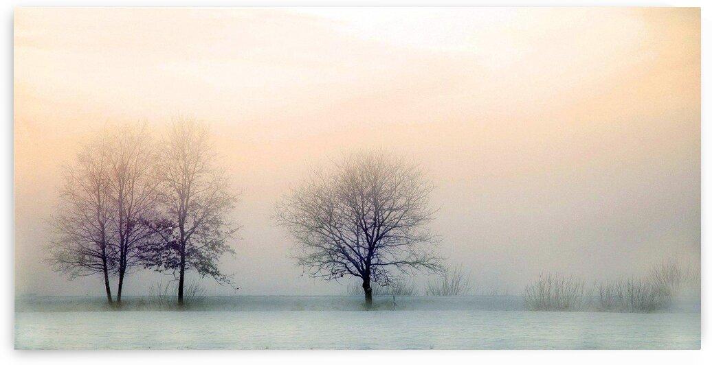 Nature winter landscape by Nature Art