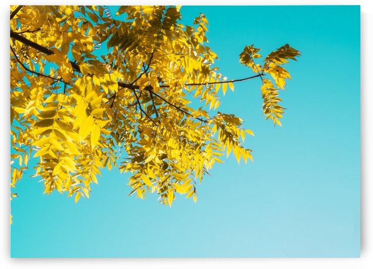 Automne jaune by Jean-Francois Turcotte