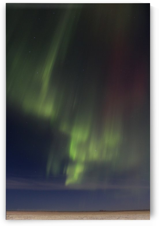 Northern Lights by Jody Majko