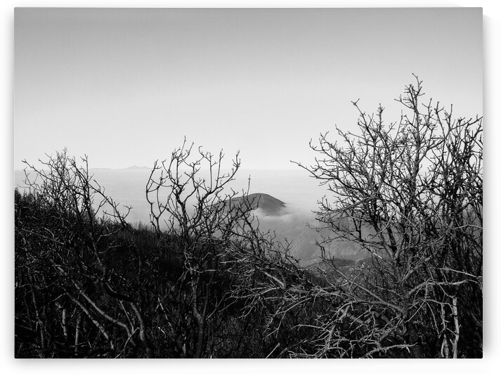 California Clouds through Mountain Brush in B&W by Bobby Twilley Jr