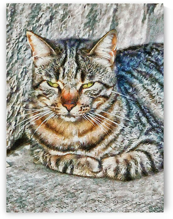 Tabby Cat Portrait by Dorothy Berry-Lound