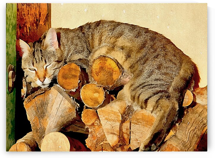 Excuse Me I Am Snoozing by Dorothy Berry-Lound