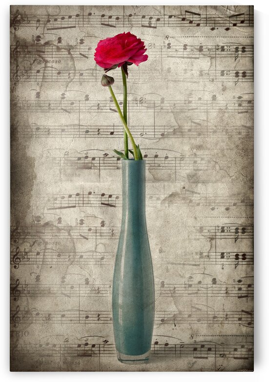 Old music by Barbara Corvino