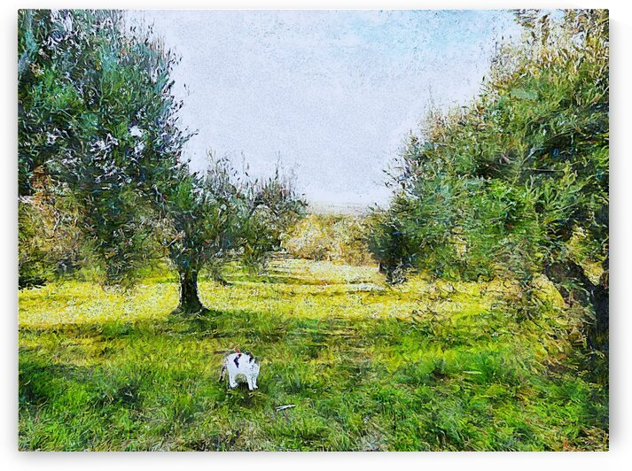 Lucy In The Olive Grove by Dorothy Berry-Lound