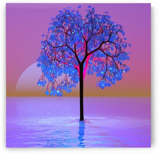 Tree Sunset by Matthew Lacey