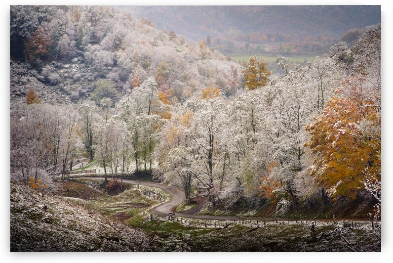 Autumn snow on Back Hollow Road Tucker County West Virginia by The Feather Cottage
