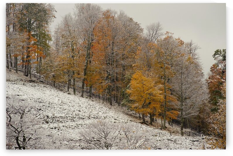 October Snow Canaan Valley WVa by The Feather Cottage