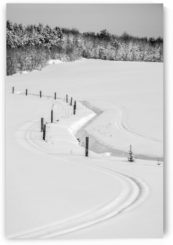 Quebec winter landscape with a winding and rustic wooden fence in the center of the snowy fields by Francois Lariviere