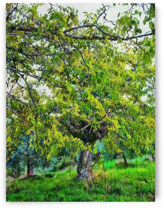 The Hidden Mulberry Tree by Dorothy Berry-Lound