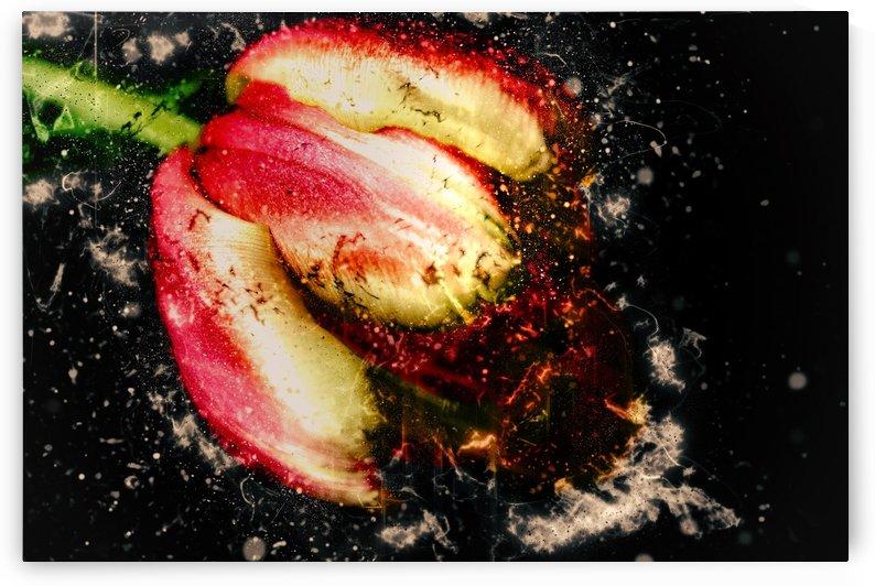 one tulip by Dagmar Marina
