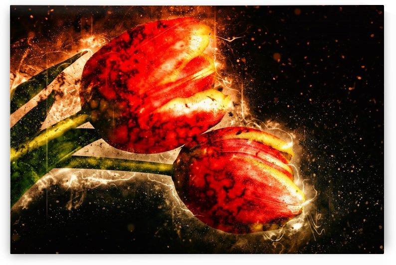 two tulips by Dagmar Marina