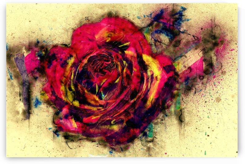 abstract rose by Dagmar Marina