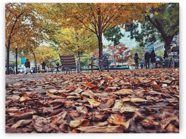 Crispy Leaves by Patricia Jekki