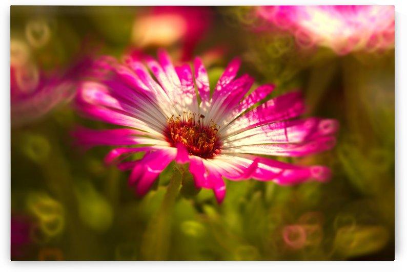sun worshippers pinkmagic by Dagmar Marina