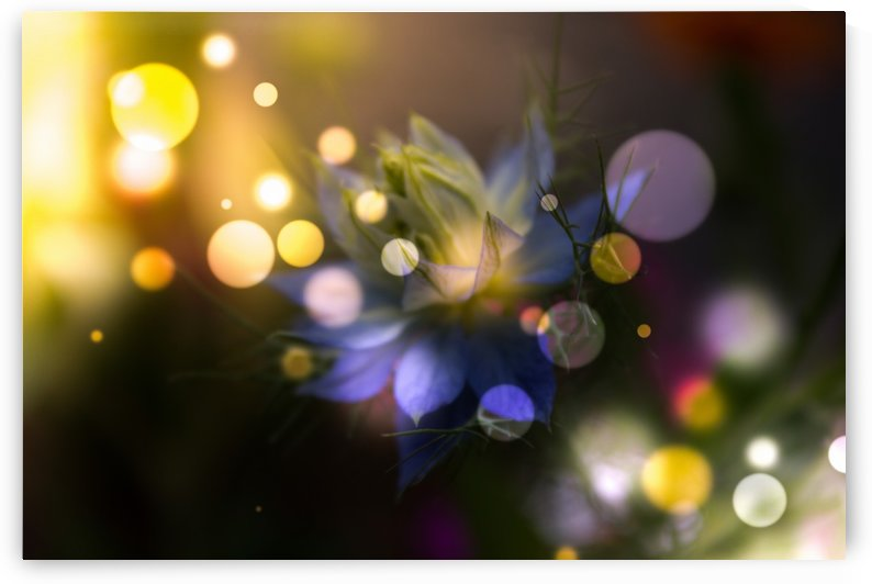 Light Magic by Dagmar Marina