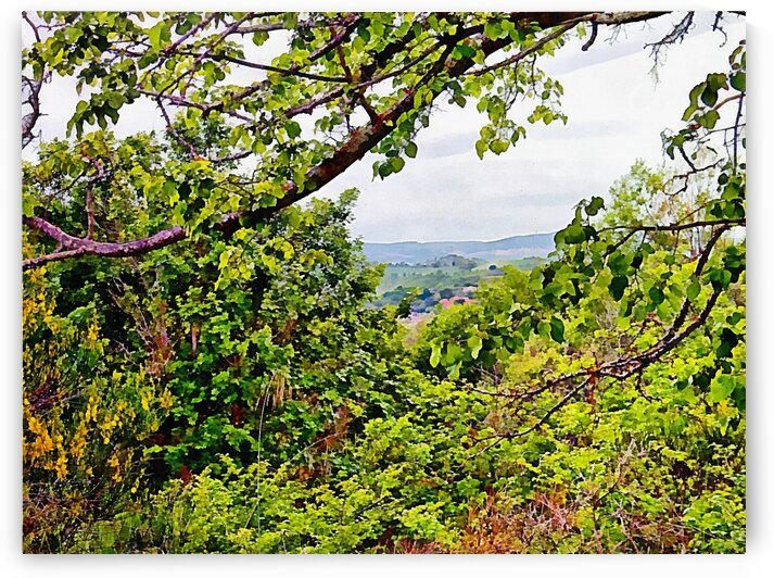 A View Across The Woodland by Dorothy Berry-Lound