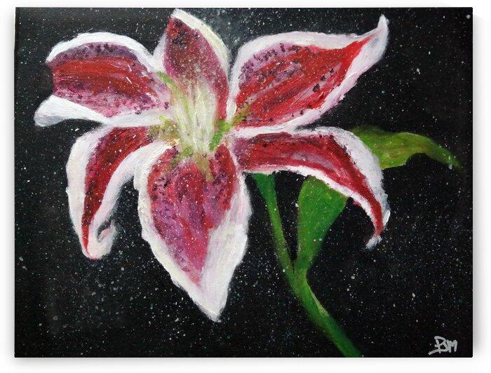 Star Struck by Paula Jane Marie