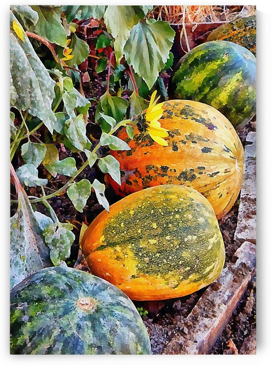 Pumpkins In A Row by Dorothy Berry-Lound