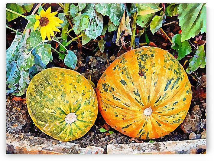 Watching Over Pumpkins by Dorothy Berry-Lound