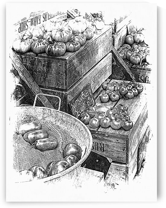 Rustic Display of Tomatoes For Sale Black and White by Dorothy Berry-Lound