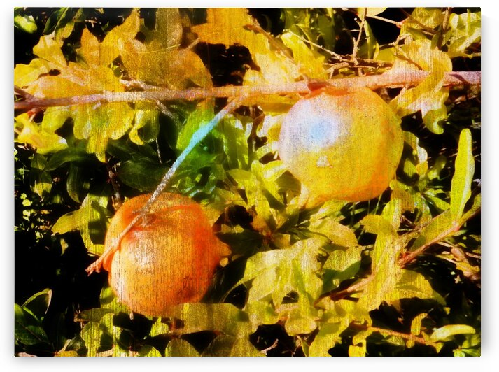 Pomegranates can be artistic too by Dorothy Berry-Lound