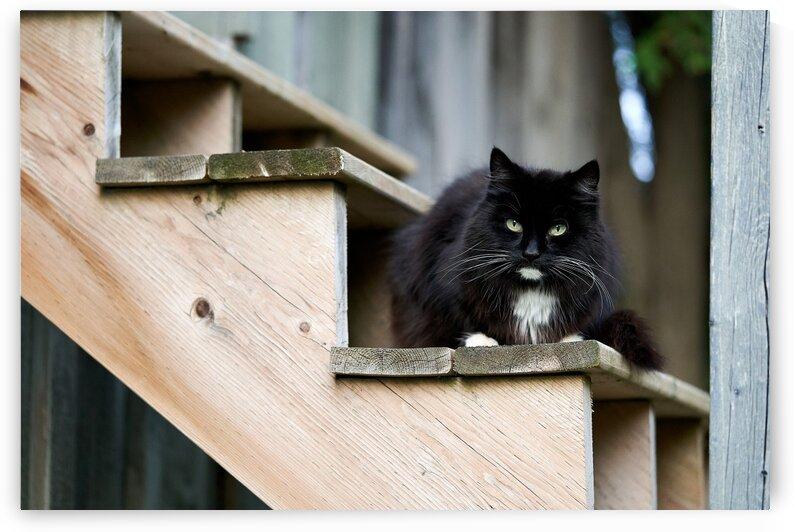 Fancy Barn Cat by Nicole Buzzing Photography